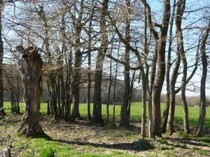 Randonnées Maison du Terroir Genouilly 71